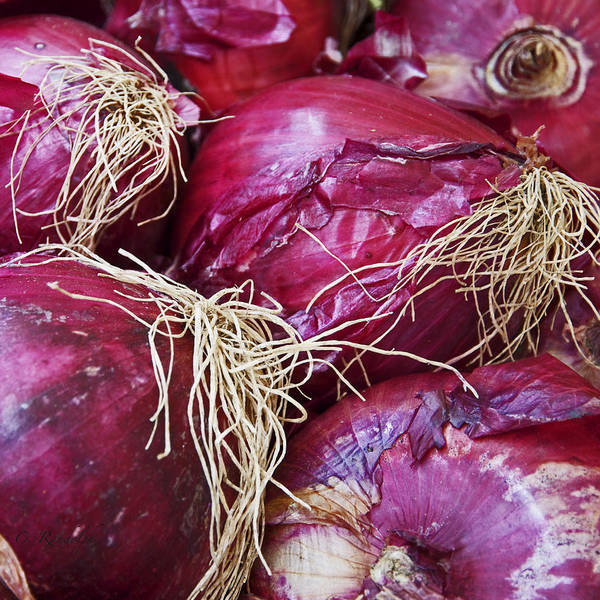 Red Onions Poster featuring the photograph Onion Skins by Cheri Randolph
