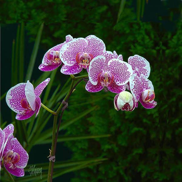 Orchid Poster featuring the photograph Orchid 2 by Stan Kwong