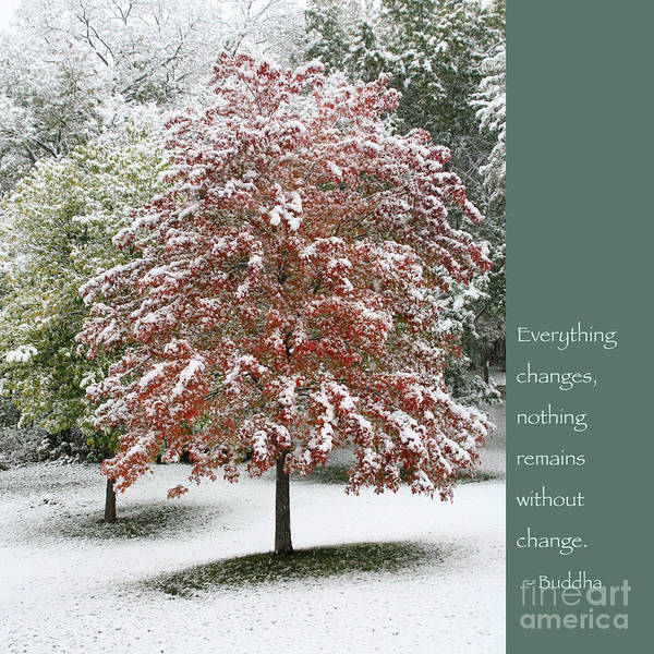 Buddha Poster featuring the photograph Snowy Maple With Buddha Quote by Heidi Hermes