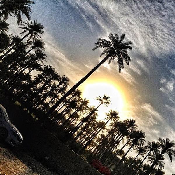 Sunrise Palm Tree Baghdad - Iraq Poster