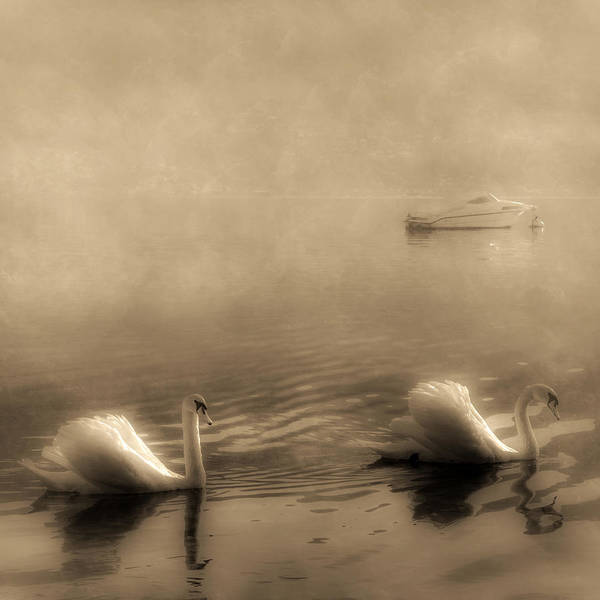 Lago Maggiore Poster featuring the photograph Swans by Joana Kruse