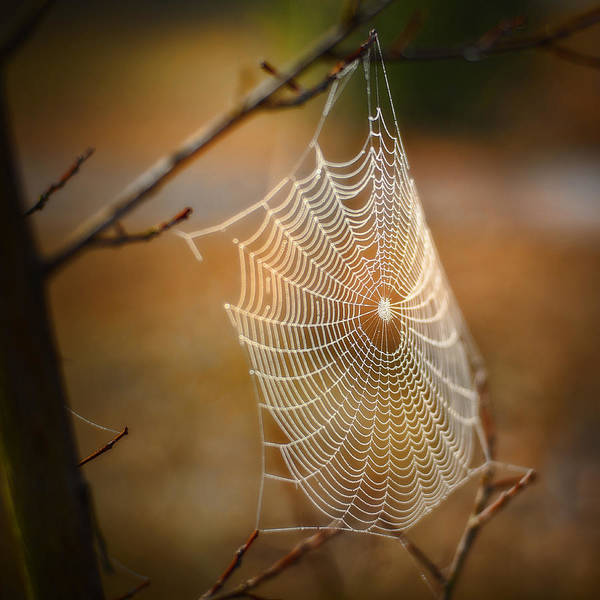 Spider Web Poster featuring the photograph Tangled Web by Brenda Bryant