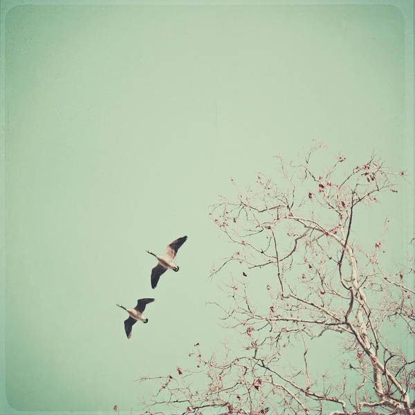 Square Poster featuring the photograph Two Geese Migrating by Laura Ruth