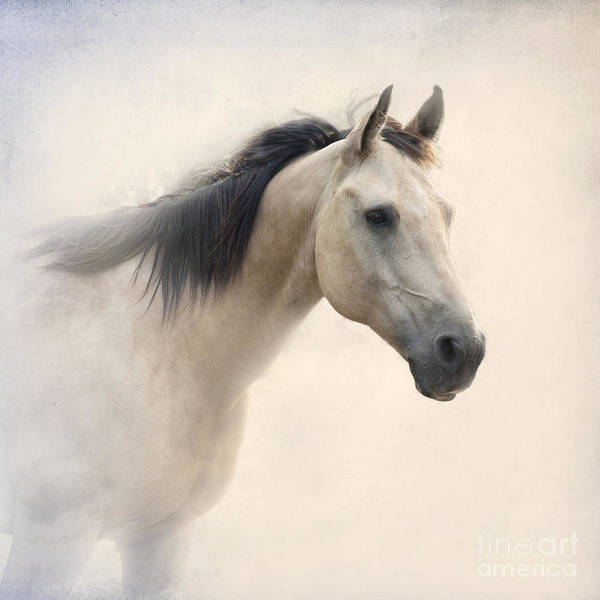Horse Poster featuring the photograph Waiting For My Lady by Betty LaRue