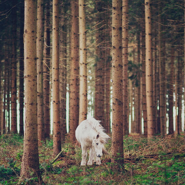 Square Poster featuring the photograph White Horse In The Wood by Julia Davila-Lampe