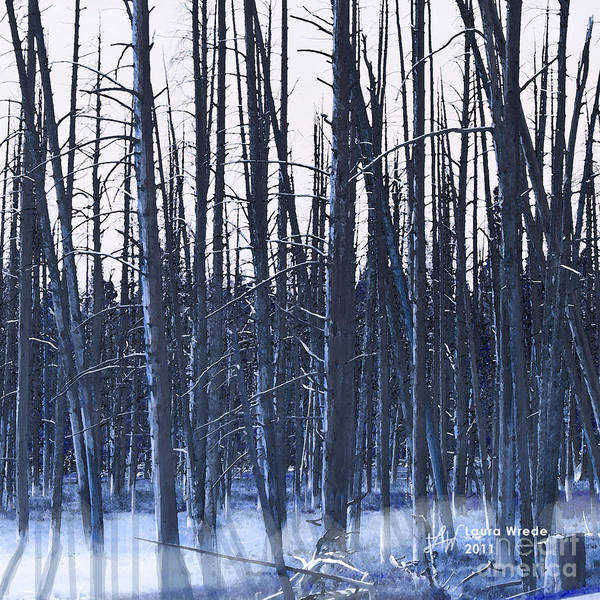 Nature Poster featuring the digital art Winter Trees by Artist and Photographer Laura Wrede