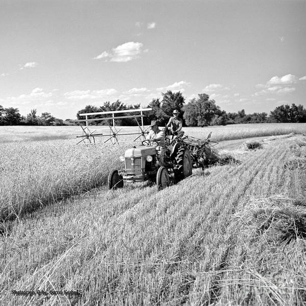 Wheat Poster featuring the photograph Old Combine by Larry Keahey