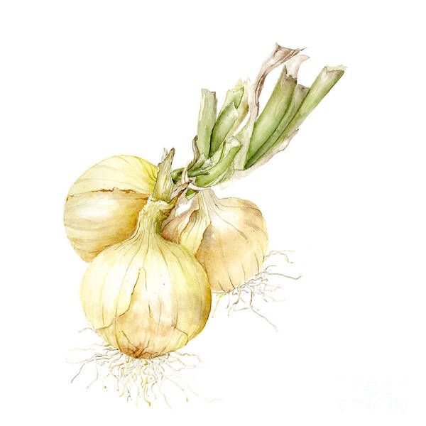 Farmers Market Poster featuring the painting Onions by Fran Henig
