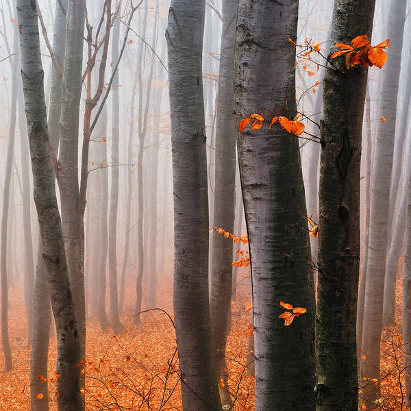 Mountain Poster featuring the photograph Orange Wood by Evgeni Dinev