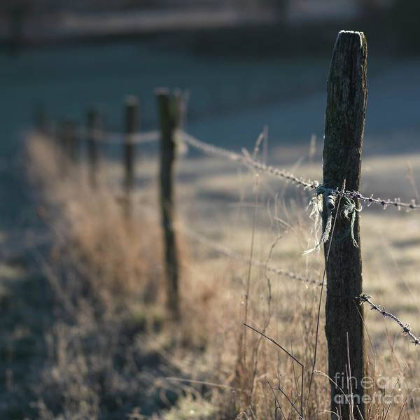 Barbed Wire Poster featuring the photograph Wooden Posts by Bernard Jaubert