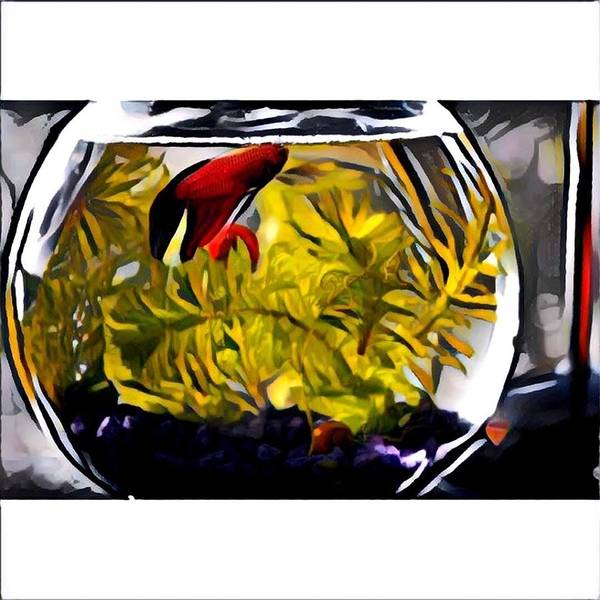 Poster featuring the digital art Siamese Fighting Fish by Melinda Sullivan Image and Design