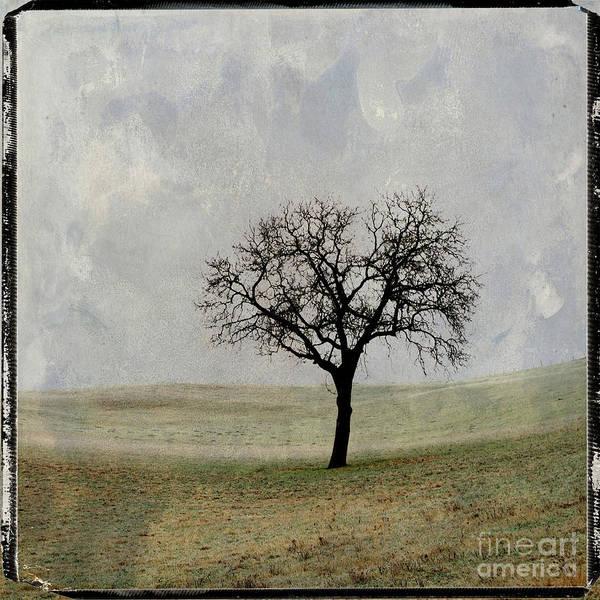 Texture Poster featuring the photograph Textured Tree by Bernard Jaubert