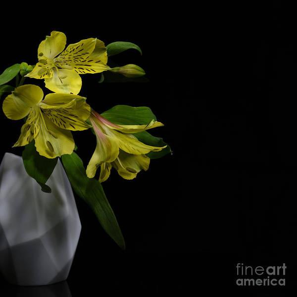 Alstroemeria Poster featuring the photograph Alstroemeria Flower by Stela Knezevic