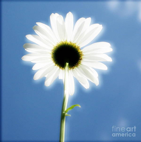Daisy Poster featuring the photograph Achievement by Idaho Scenic Images Linda Lantzy