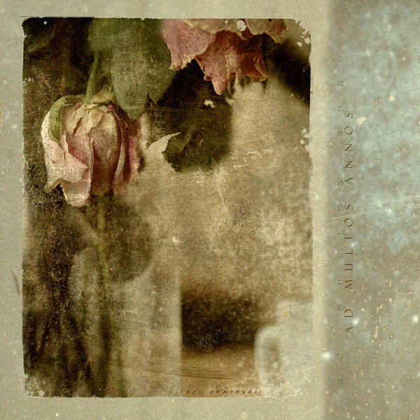 Flowers Poster featuring the photograph Ad Multos Annos by Inesa Kayuta