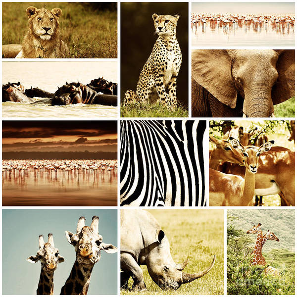 Africa Poster featuring the photograph African Animals Safari Collage by Anna Om