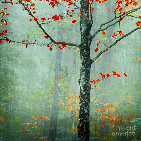 Tree Poster featuring the photograph Another Day Another Fairytale by Katya Horner