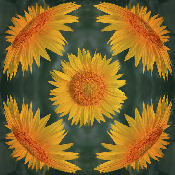 Sunflower Poster featuring the photograph Around The Sunflower by Nikolyn McDonald