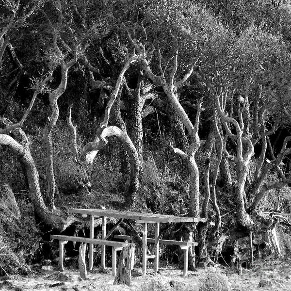 Trees Poster featuring the photograph Beach Trees by Patricia Januszkiewicz