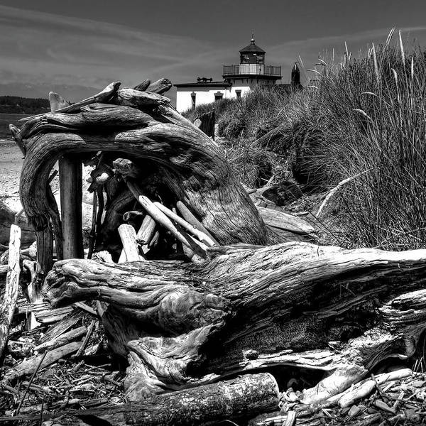 Tree Stump Poster featuring the photograph Beached Tree Stump by David Patterson