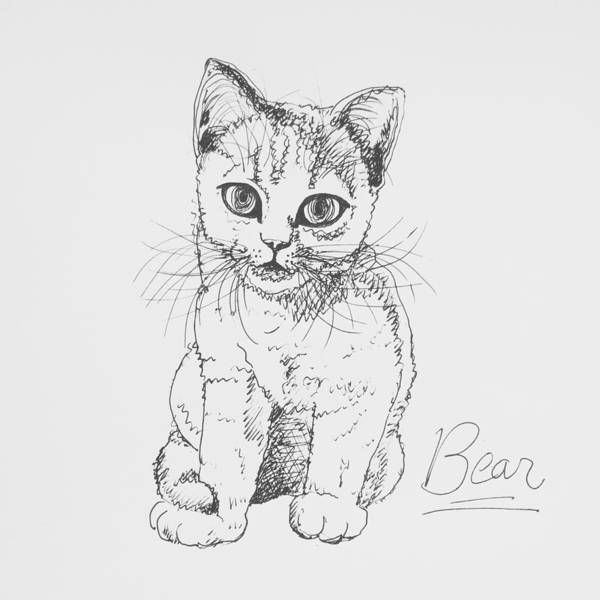 Cat Poster featuring the drawing Bear by Pookie Pet Portraits