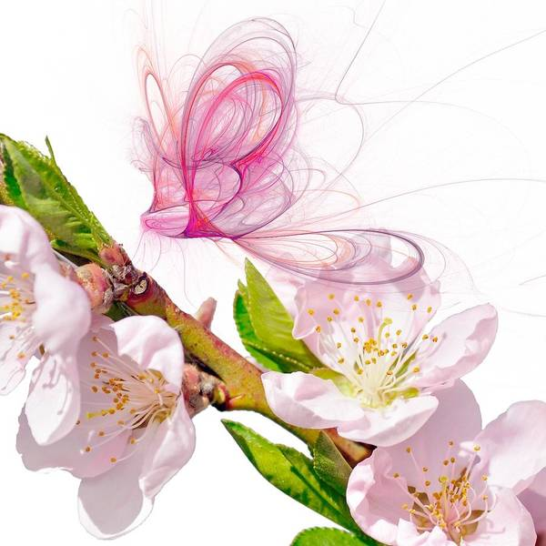 Blossom Poster featuring the digital art Blossom And Butterflies by Sharon Lisa Clarke