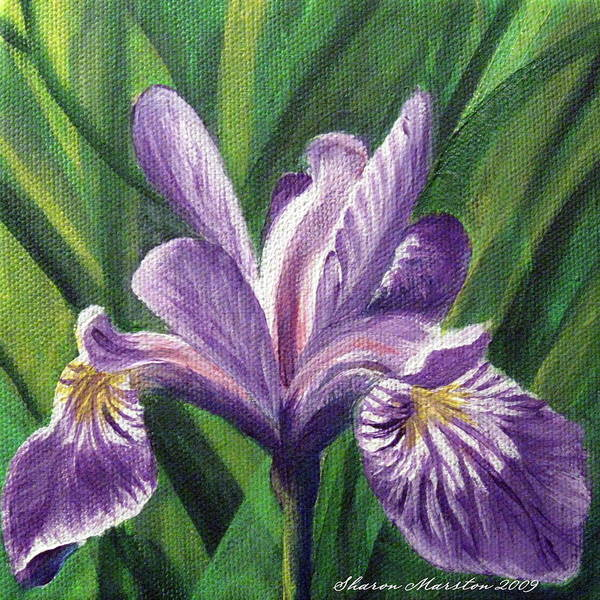 Blue Flag Iris Poster featuring the painting Blue Flag Iris by Sharon Marcella Marston