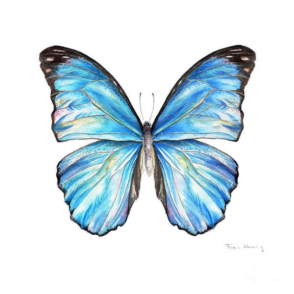 Butterfly Poster featuring the painting Blue Morpho Butterfly by Fran Henig