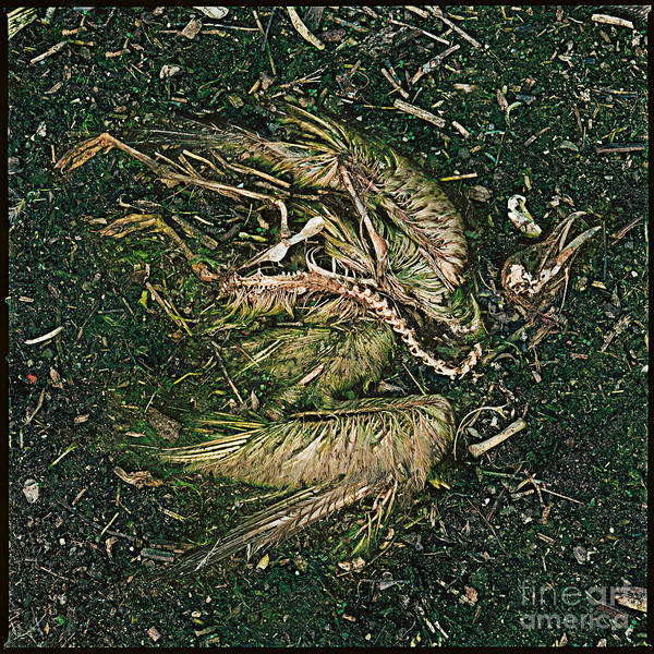 Bird Feather Green Born Closeup Poster featuring the photograph Bone Feather And Green by Ty Lee
