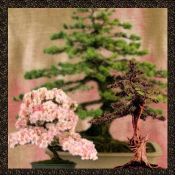 Tree Poster featuring the digital art Bonsai Garden by Jannina Ortiz