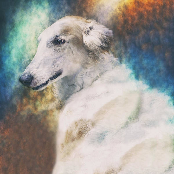 Borzoi Poster featuring the photograph Borzoi Portrait by Wolf Shadow Photography