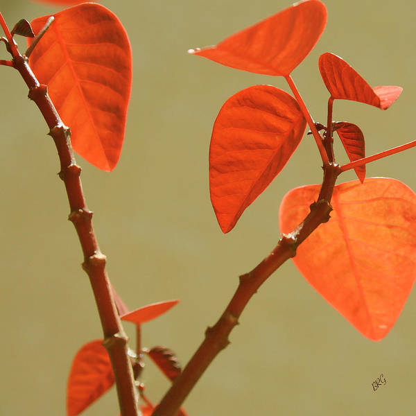 Orange Leaves Poster featuring the photograph Copper Plant by Ben and Raisa Gertsberg