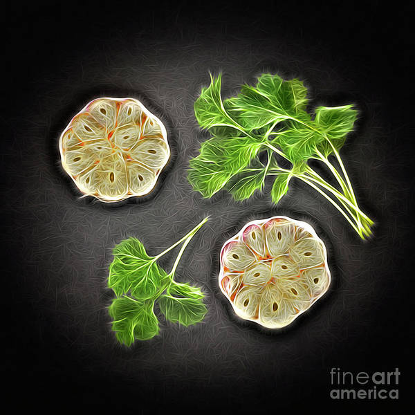 Ingredient Poster featuring the digital art Coriander And Garlic Still Life. by Phill Thornton