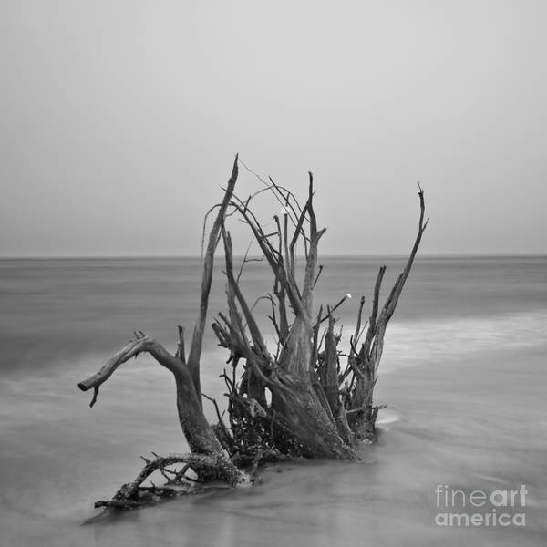 Driftwood Poster featuring the photograph Driftwood Infrared 60 by Rolf Bertram