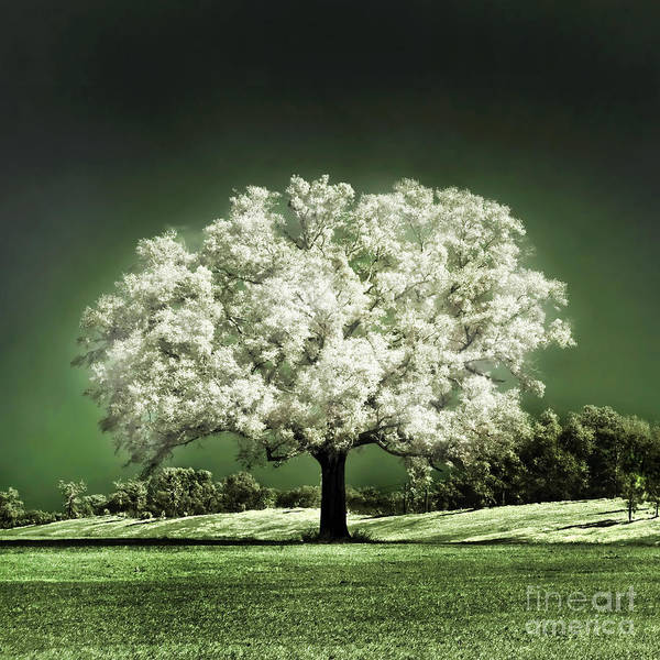 Baby Oak Tree Emerald Meadow Hugo Cruz Infrared Ir Fine Art Photography Infra Red Glowing Magical Ethereal Life Passion Nature Green Grass Jade Magnolia Cherry Blossom Poster featuring the photograph Emerald Meadow Square by Hugo Cruz