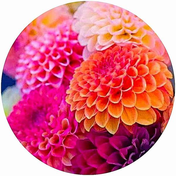 Flowers Colorful Orange Pink Poster featuring the photograph Flowers by Sarah Waldman