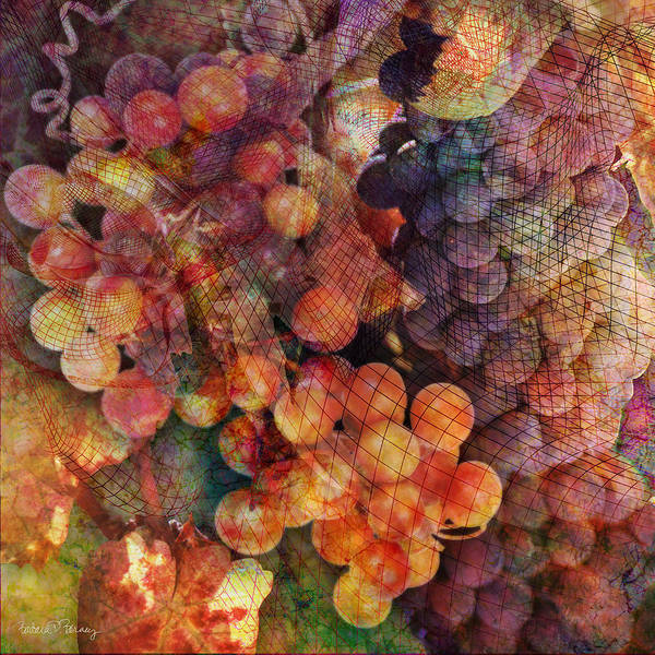 Grapes Poster featuring the digital art Fruit Of The Vine by Barbara Berney