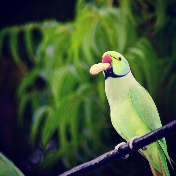 Parrot Poster featuring the photograph Have You Gone Nuts by Kapil Sharma