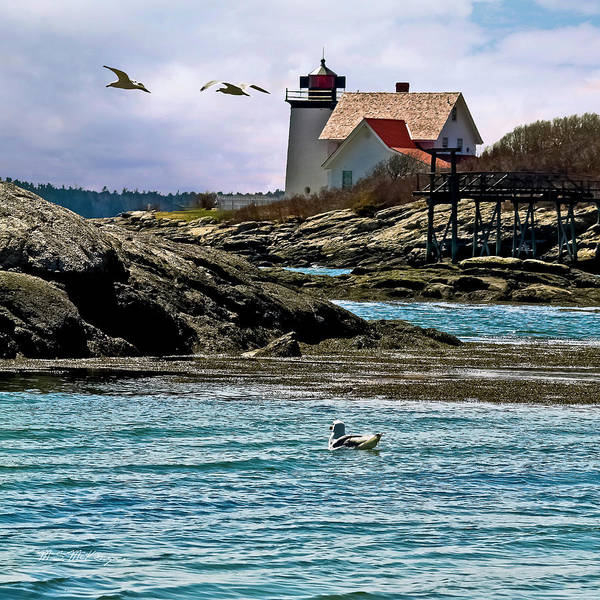 Maine Lighthouses Poster featuring the photograph Hendricks Head Light by M S McKenzie