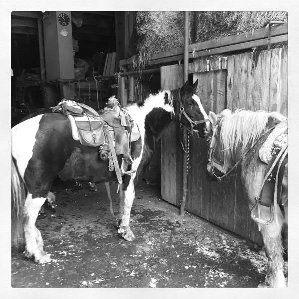 Horses Poster featuring the photograph Horses In The Barn by Christina McNee-Geiger