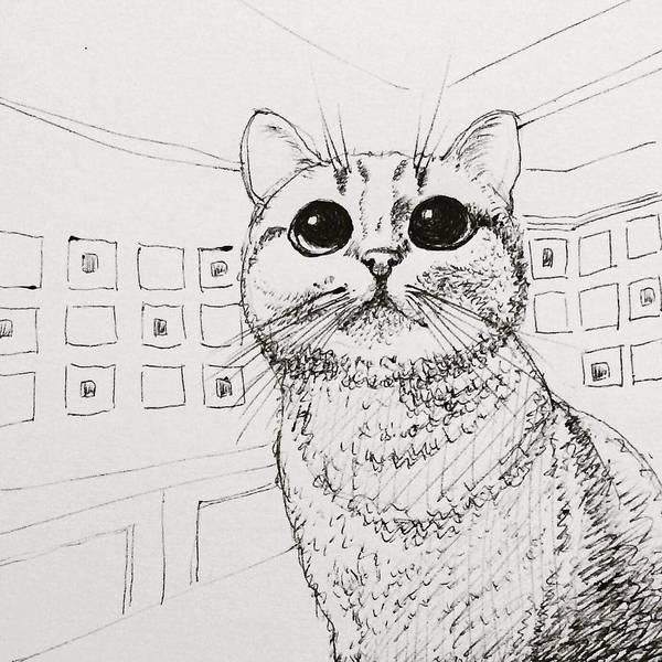 Cat Poster featuring the drawing Irma by Pookie Pet Portraits