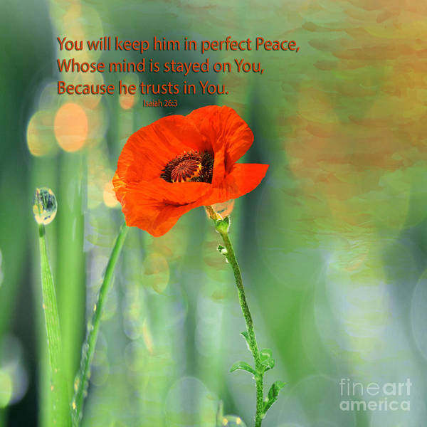Floral Poster featuring the photograph Isaiah 26 3 Of Beverly Guilliams by Beverly Guilliams