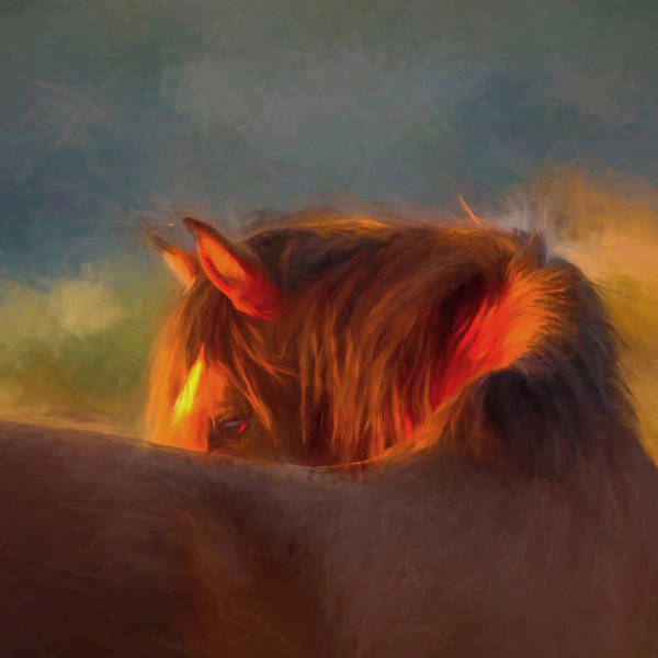 Stallion Poster featuring the photograph Last Remaining Light Of The Day by Susan Westervelt
