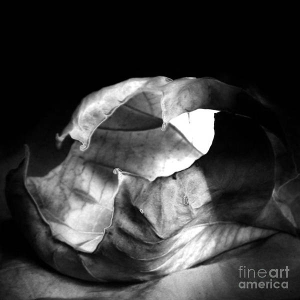 Leaf Poster featuring the photograph Leaf Series 02a01 by Timothy Bischoff