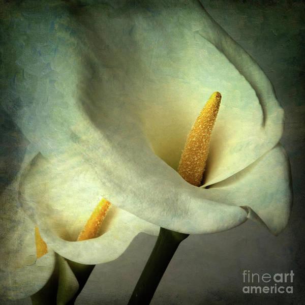 Arum Lily Poster featuring the photograph Lillies by Bernard Jaubert