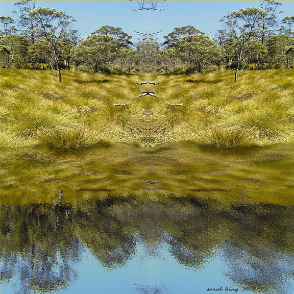 Button Grassland Poster featuring the photograph Mountain Button Grass by Sarah King