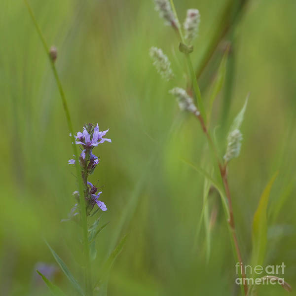 Soft Poster featuring the photograph Natures Poetry... by Nina Stavlund