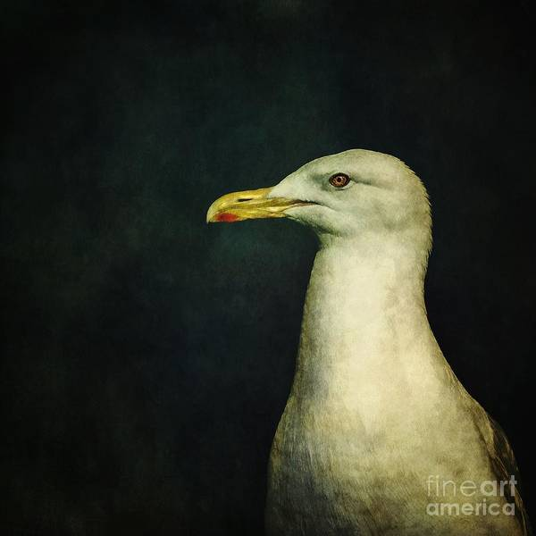 Seagull Poster featuring the photograph Naujaq by Priska Wettstein