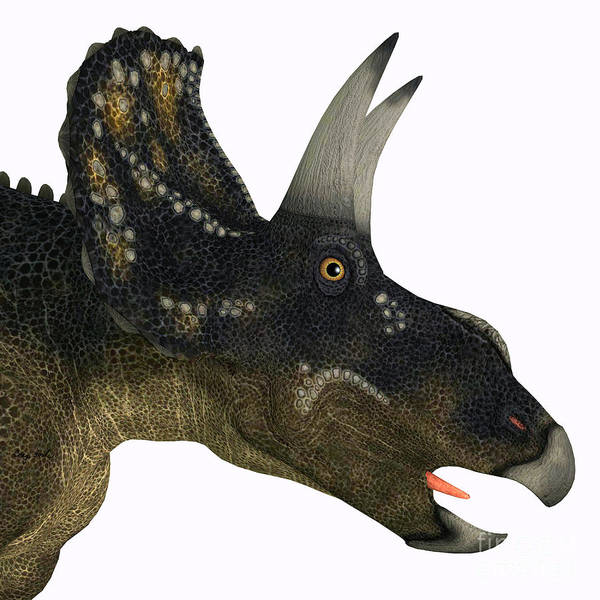 Nedoceratops Poster featuring the painting Nedoceratops Dinosaur Head by Corey Ford