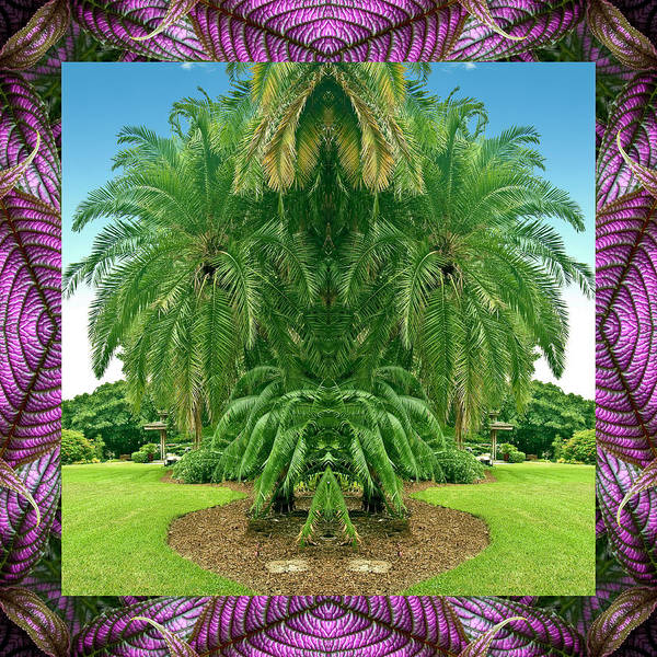 Nature Photography Poster featuring the photograph Palm Tree Ally by Bell And Todd
